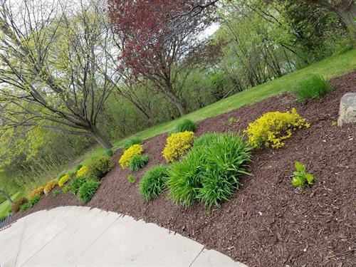 Mulch, plantings