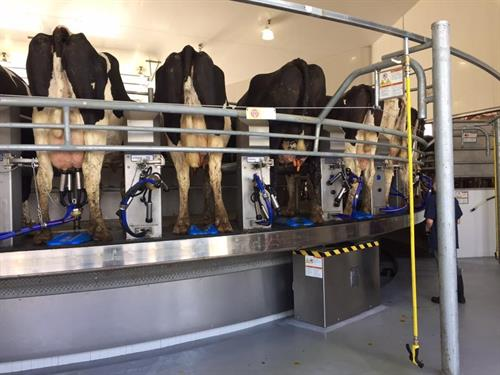 The Milking Parlor