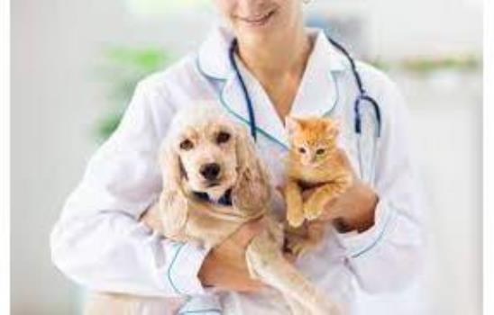 Pets & Veterinary