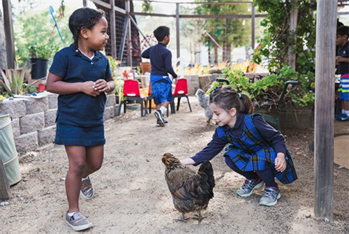 "Our students take turns on ""chicken duty"" and learn how to care for and connect with animals and their habitats."