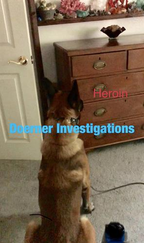 K9 Barron showing us where the drugs are