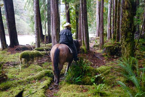 Gallery Image Clayoquot_Wilderness_Resort_River_Trail_Misty_Horse_Ride.jpg