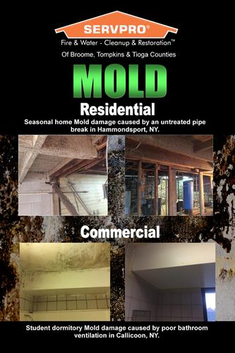 Mold Damage; Before & After