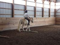 Student-Horse (AP-Thor-zip13787)