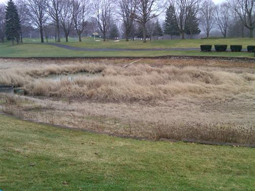 EnJoie Golf Course Endicott 18th Hole pond before project started, Overgrown and holding no water