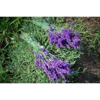 Lavender Fest 4 - The Lavender Patch Farm