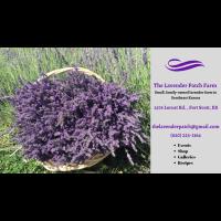 The Lavender Patch Farm Open Season