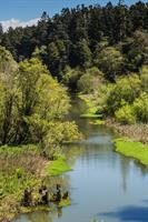 The Beautiful Pudding Creek Estuary