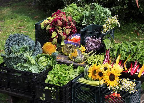 Organic Demonstration Vegetable Garden