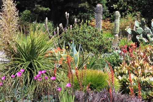 While there are over 150 different species and cultivars planted in the Succulent Garden, our collection represents only a tiny portion of the vast and wonderful world of succulents.