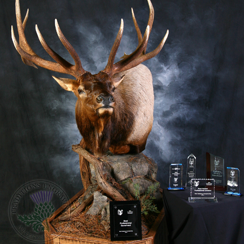 Ohio Taxidermists Association State Championship