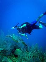 SCUBA Diving, Roatan, Honduras