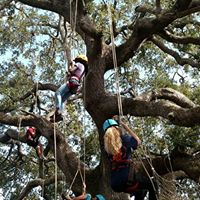 Youth on Tree Climbing Field Trip