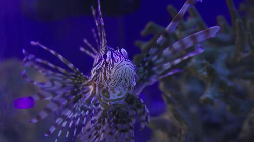 We've got an aquarium too!