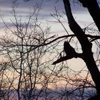 Expert-Led Owl Prowl