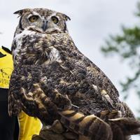 Live Owl Programs (11 am, & 2pm)
