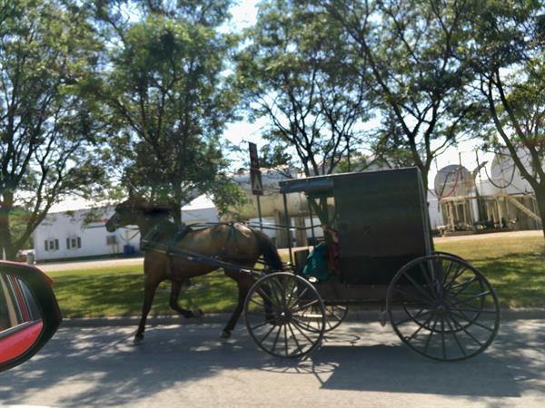 Gallery Image Amish_10_119708313_142940594178506_2692555924353835963_n.jpeg