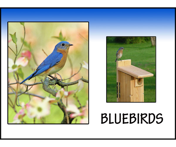 Happy with Bluebirds!