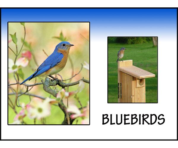 Happy with Bluebirds!