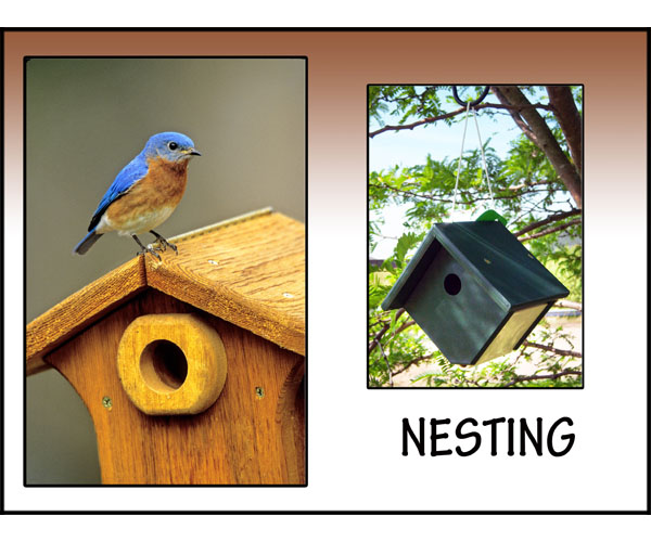 Cozy Bird Houses!