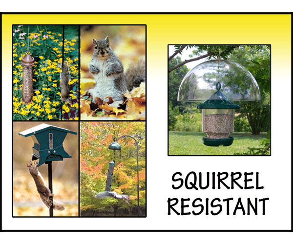 Squirrel Proof Feeders!
