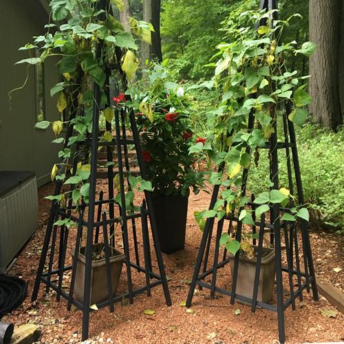 Garden Trellis Treats!