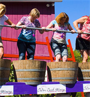 Harvest Fest activities