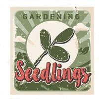 Seedlings Gardening