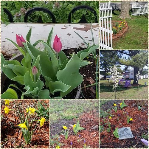 Springtime at Jeremiah House