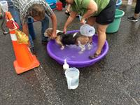 Wags & Washes - EAPL's Annual Dog Wash