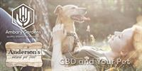 CBD and Your Pet