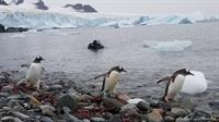 Antarctica: Lessons from the Bottom of the World
