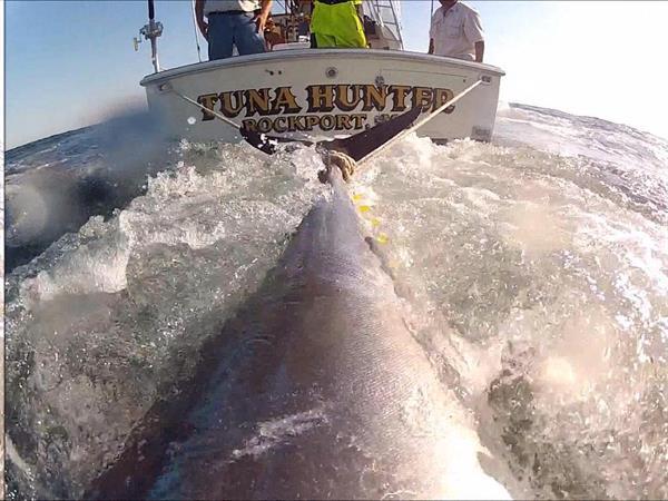 Tail Wrapped! Bluefin Tuna Charter