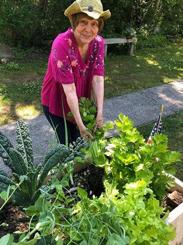 Gardener Joanne harvesting celery in her backyard garden, built by Backyard Growers