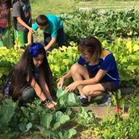 LCM's Community Garden at KE Little Elementary