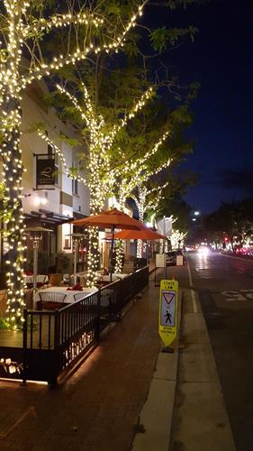 City Tree Lighting