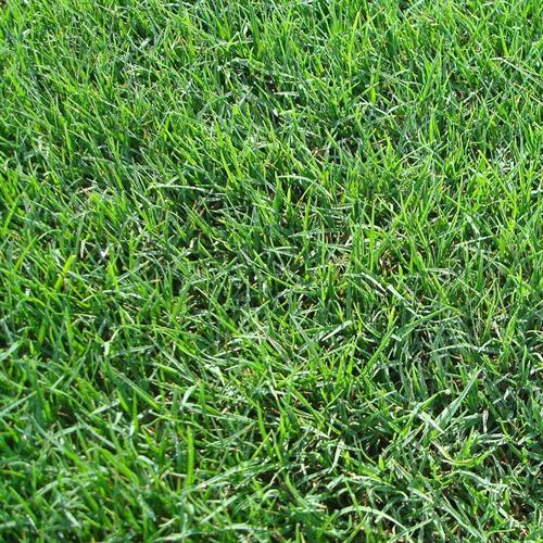 Keeping lawns looking their best.
