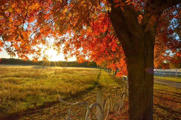Gallery Image Bicycles__Fall_Sunlight.jpg