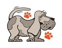 Canine Central- Doggie Day Camp & Boarding
