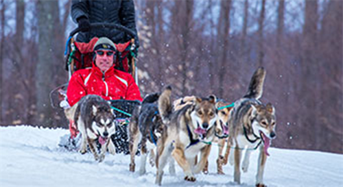 Dog Sledding & Winter Adventures