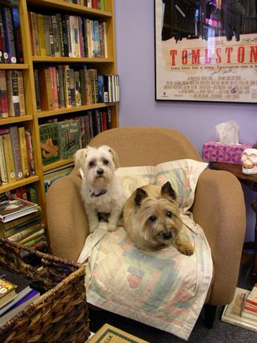 Bookstore canines Simon Templar and Lord Peter Wimsey
