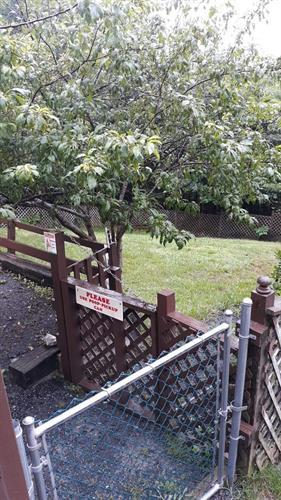 Large, fenced, grass doggie yard.