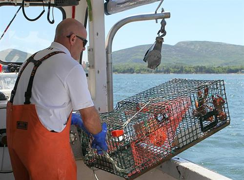 Watch lobster traps get hauled aboard the boat!