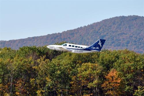 Gallery Image Plane_with_Foliage.jpg