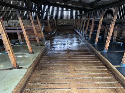 Cow cubicle shed clean in Holsworthy.