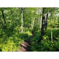 SHTA Guided Hike: Family-friendly Hike to the Lake Superior Zoo