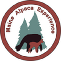 Maine Alpaca Experience