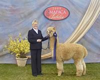 Our award winning alpacas are spectacular