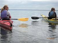 Fall Foliage Sea Kayak Tours