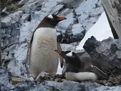 Gallery Image Penguins.JPG